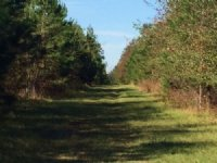 Dawson Tract - Price Reduced : Allendale : Allendale County : South Carolina