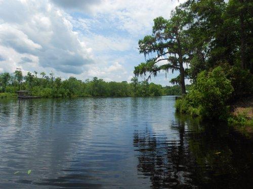 Black River Beauty : Georgetown County : South Carolina