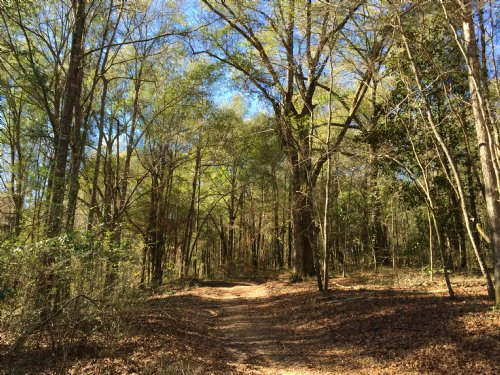 Hyman Property 294.45 Ac : Honoraville : Crenshaw County : Alabama