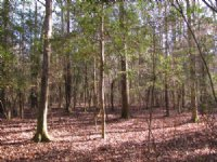 Orchard Hill : Ravenel : Charleston County : South Carolina