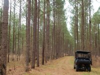 Gorgeous Property : Troy : Pike County : Alabama