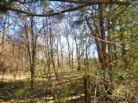 40 Ac With Spring And Flowing Creek