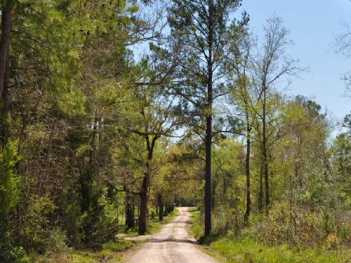 10.5 Acres Jordy Rd. : Huntsville : Walker County : Texas