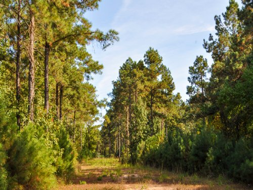 1,671 Acres Tarkington Bayou : Tarkington : Liberty County : Texas