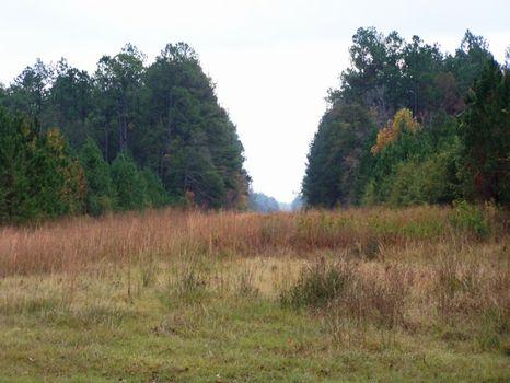 Austin Tract - 400 Acres : Oliver : Effingham County : Georgia