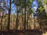 13.747 +/- Acres, Mixed Woods