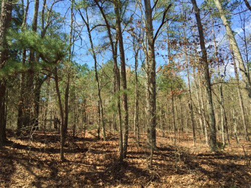 13.746 +/- Acres, Mixed Woods : Adairsville : Bartow County : Georgia