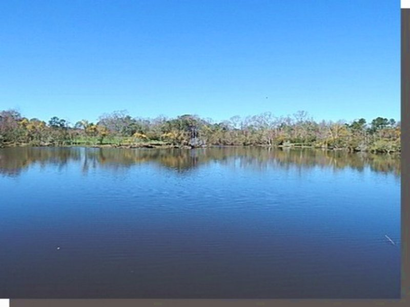 409 Acres In Pearl River County : Carriere : Pearl River County : Mississippi