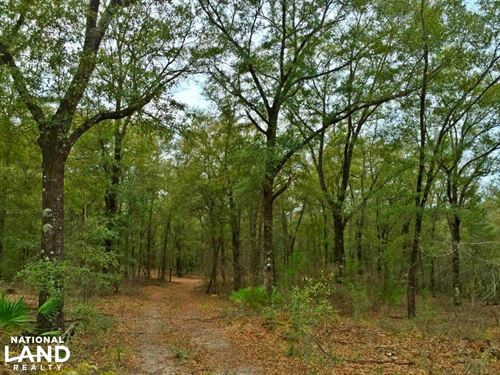 Walker Lane Longleaf Hardwood Tract : Chunchula : Mobile County : Alabama