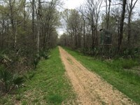 794 Ac Deer & Duck Hunting Wit : Newellton : Tensas Parish : Louisiana