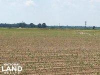160 Acres Row Crop Farmland