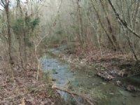 Williams 62 : Tompkinsville : Monroe County : Kentucky