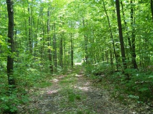 Land O' Lakes - 39.92 Acres : Land O Lakes : Vilas County : Wisconsin