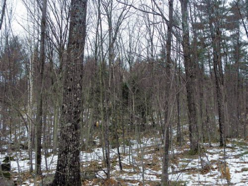 Poke-o-moonshine Forest : Lewis : Essex County : New York