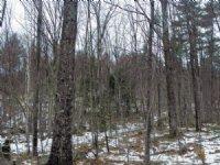 Poke-o-moonshine Forest