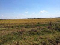 220 Acre Amagon Farm