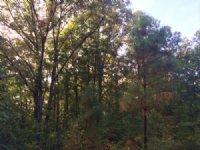 Possum Grape 168 Ac Hunting Tract