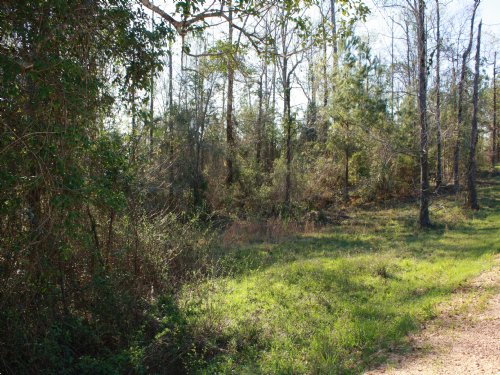 17 Acre Residential Opportunity : Brookhaven : Lincoln County : Mississippi