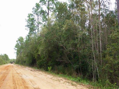 The Thornton Tract : Milton : Santa Rosa County : Florida