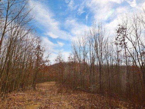 Bear Run Rd - 104 Acres : South Webster : Jackson County : Ohio