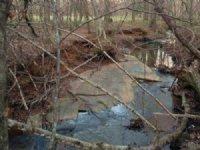 Cattail Woods : Eatonton : Putnam County : Georgia