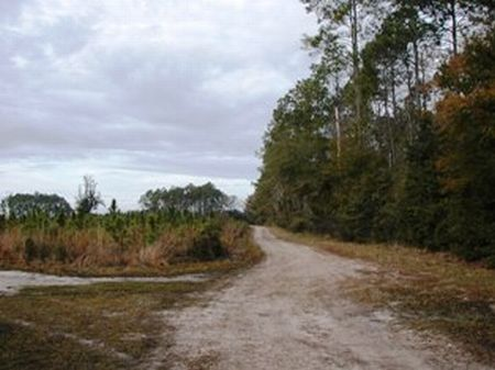Great Investment Land : East Palatka : Flagler County : Florida