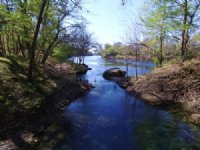 Price Reduced - River Frontage : O'brien : Suwannee County : Florida