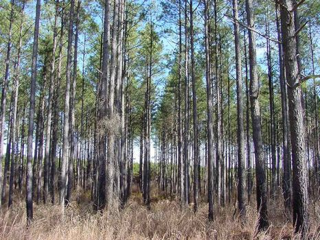 Belfast Plantation - 550 Acres : Newberry : Newberry County : South Carolina
