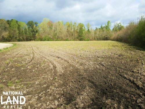 Pasture Or Row Crop Acreage : Atkinson : Pender County : North Carolina