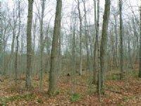 Elmore Pond Forest