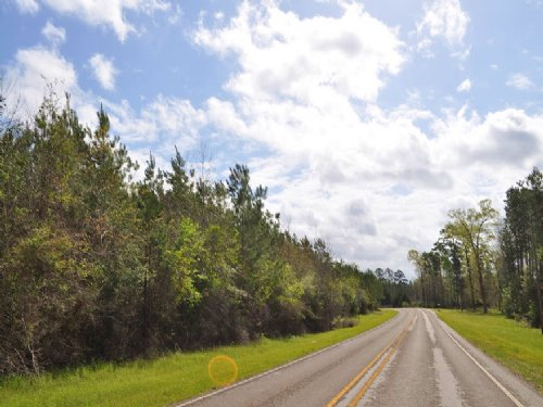 289 Acres Fm 256 : Colmesneil : Tyler County : Texas