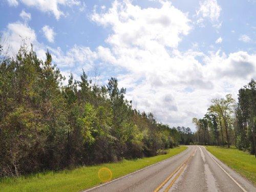 145 Acres Fm 256 : Colmesneil : Tyler County : Texas