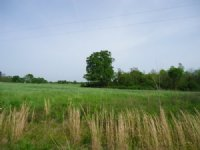Ultimate Hunting Tract - 31 Acres