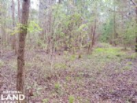 Residential Lot With Acreage