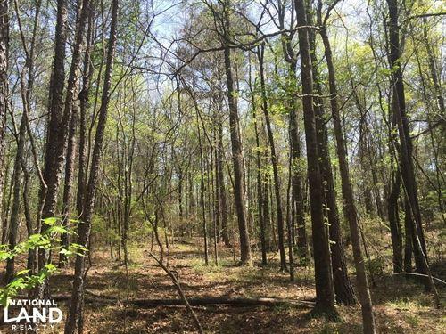 Chubbehatchee Creek Tract : Eclectic : Elmore County : Alabama