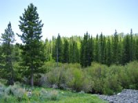 Beaver Creek Estates - Price Reduce