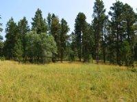 Mountain Cabin Site 5c Bear Lodge M