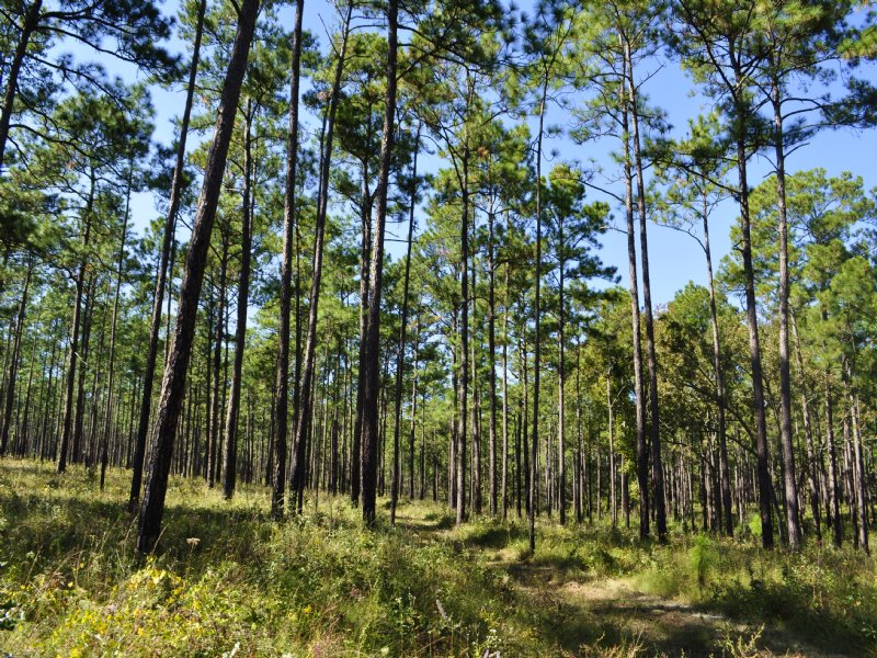 Windy Wood Plantation : Farm for Sale in Thomasville ...