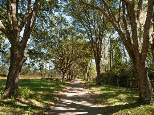 Tantura : Tallahassee : Leon County : Florida