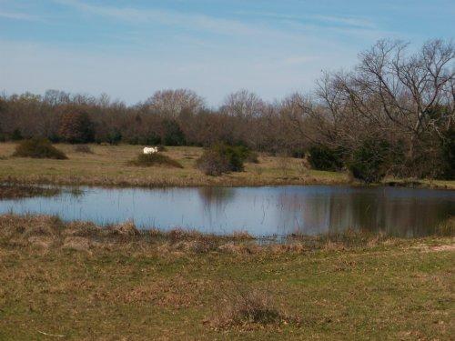 55 Acers For Sale Ne Tx : Paris : Lamar County : Texas