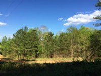County Road 253 Tract