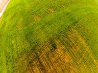 5/20 Auction: 80 Acs Crop / Pasture