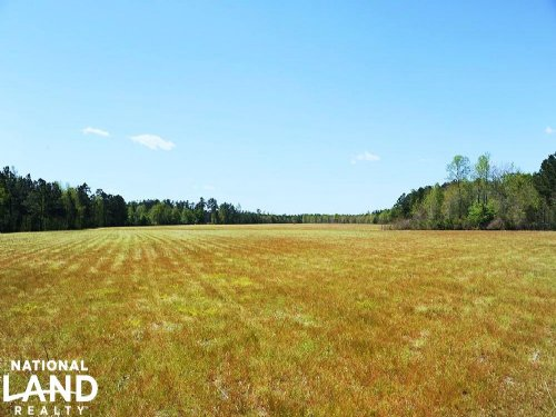 Large Acre Farm & Timber Tract : Cerro Gordo : Columbus County : North Carolina