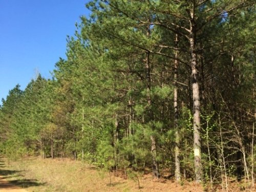 70 Acres For Sale : Mccool : Choctaw County : Mississippi