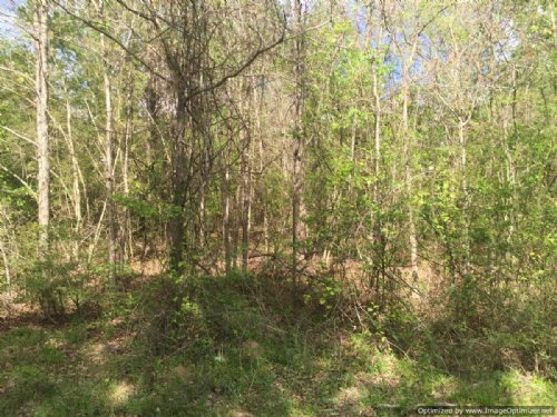 31 Acre Hunting Tract : Gloster : Amite County : Mississippi