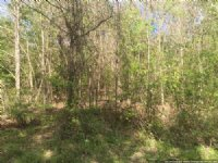 31 Acre Hunting Tract