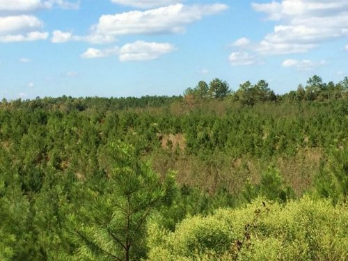 Timberland Investment Kosciusko Ms : Kosciusko : Attala County : Mississippi