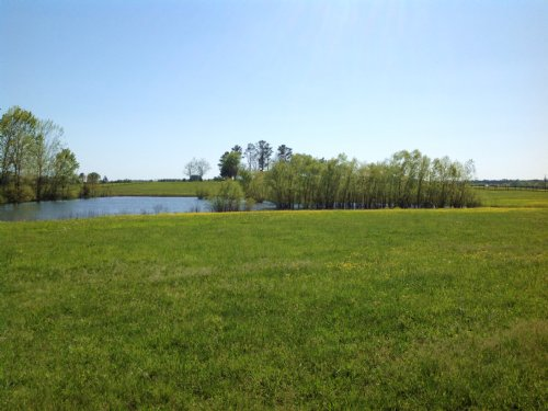 21 Acre Homestead Farm : Marion Junction : Perry County : Alabama