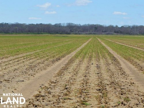 Senatobia Creek Cropland : Senatobia : Tate County : Mississippi