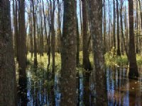 Bridges Tract : Rowland : Robeson County : North Carolina